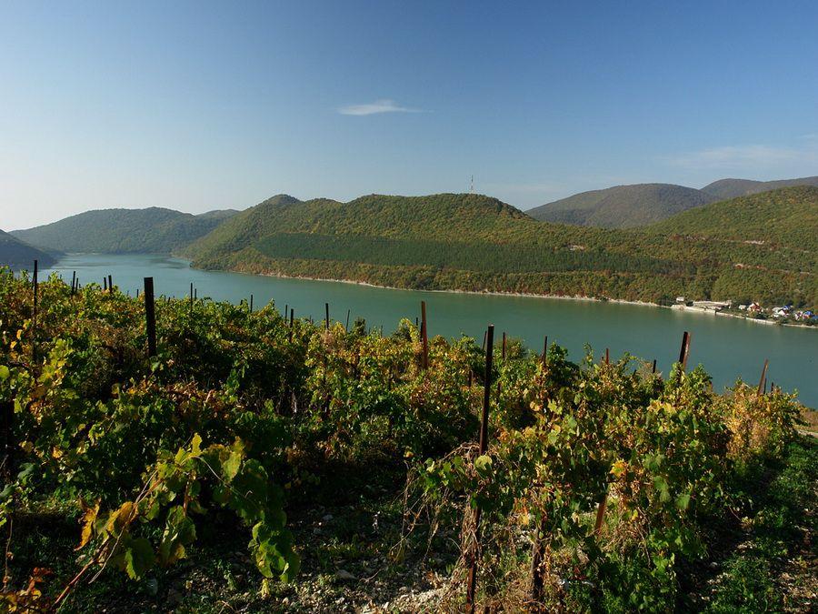 Фото виноградников Абрау-Дюрсо на горных склонах