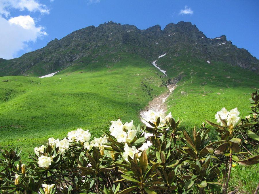 Ауадхара – альпийские луга в Абхазии фотография