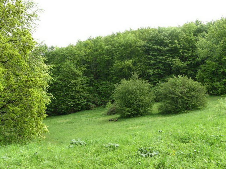 Фото пейзажей Национального ботанического сада им Гришко