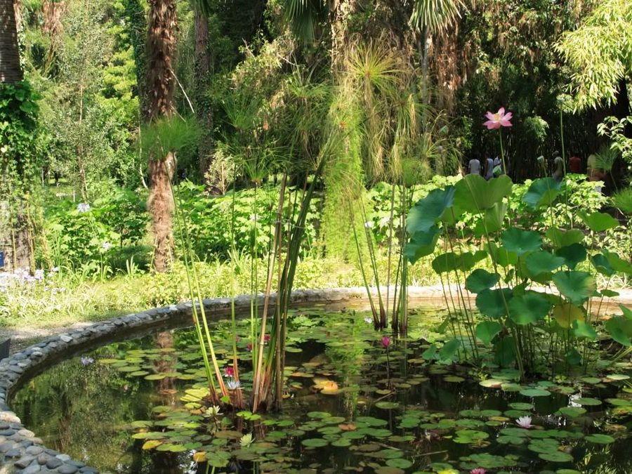 Пруд с лилиями в Сухумском ботаническом саду фото
