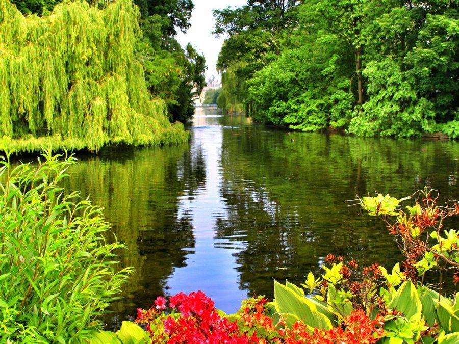 Парк и озеро в парке Букингемского дворца фото Англии