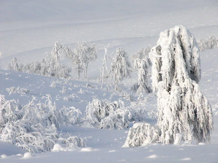 Буртинская степь в Оренбургском заповеднике вид зимой фото