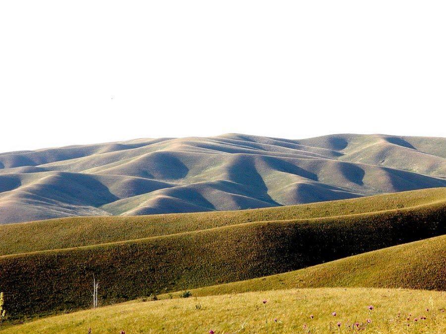 Буртинская степь в Оренбургском заповеднике фото