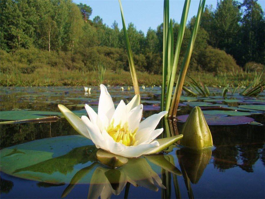 Фото красивой природы Бузулукского бора
