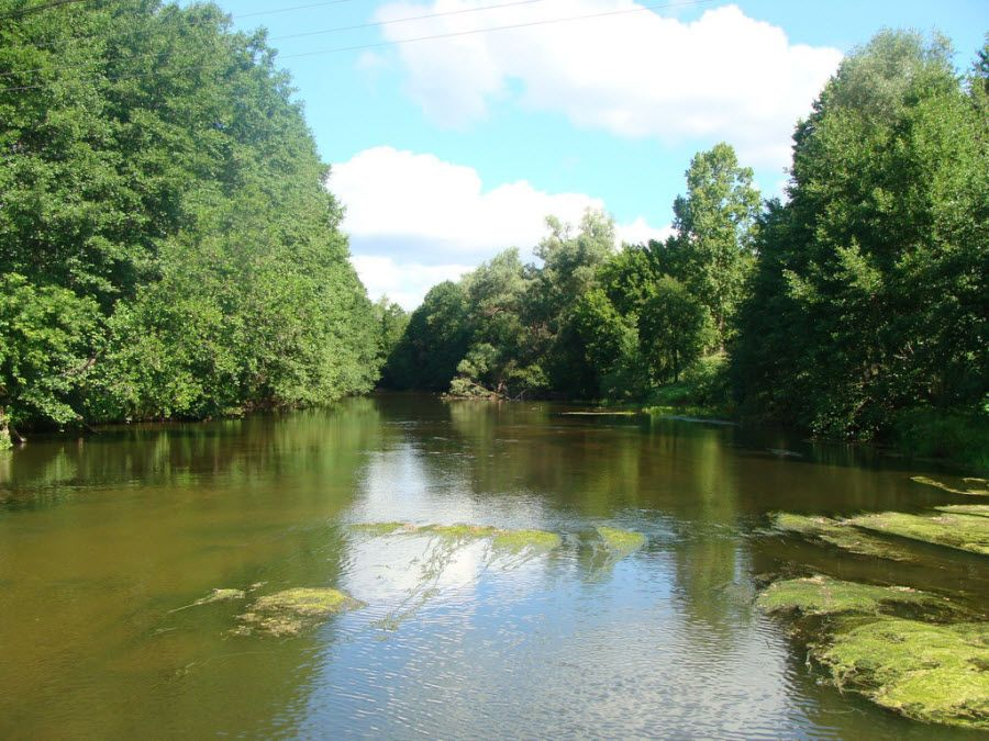 Вид на реку Бузулукского бора фото