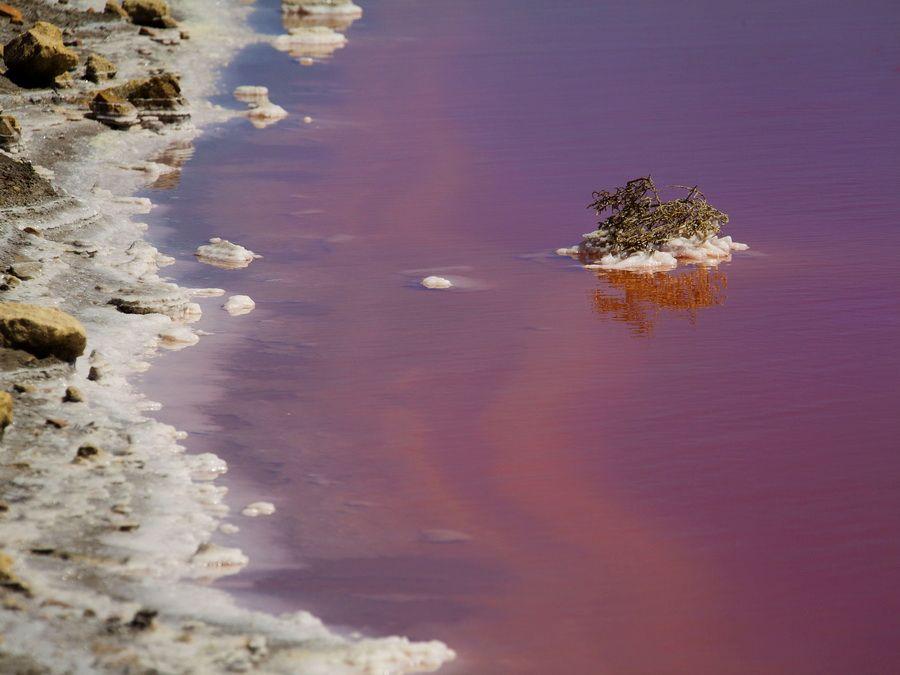 Фотография солончакового озера в Камарге Франция