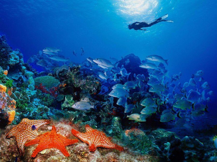 Фотография подводного мира около острова Кайо Гильермо, Куба