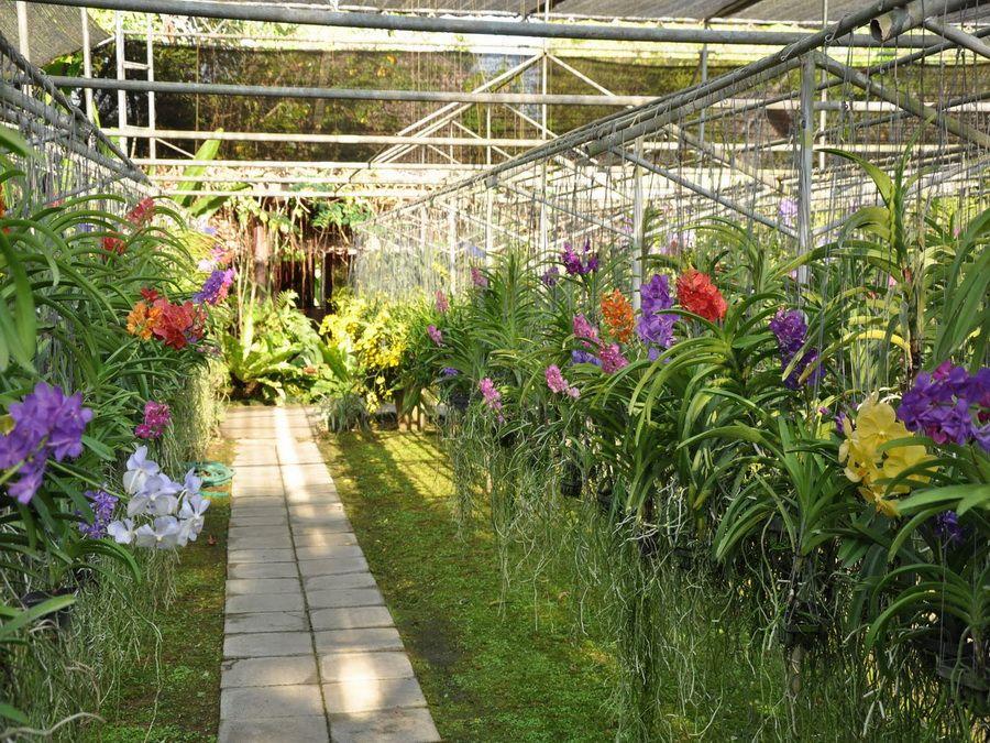 Фото питомника орхидей и бабочек в Чианг Май Таиланд