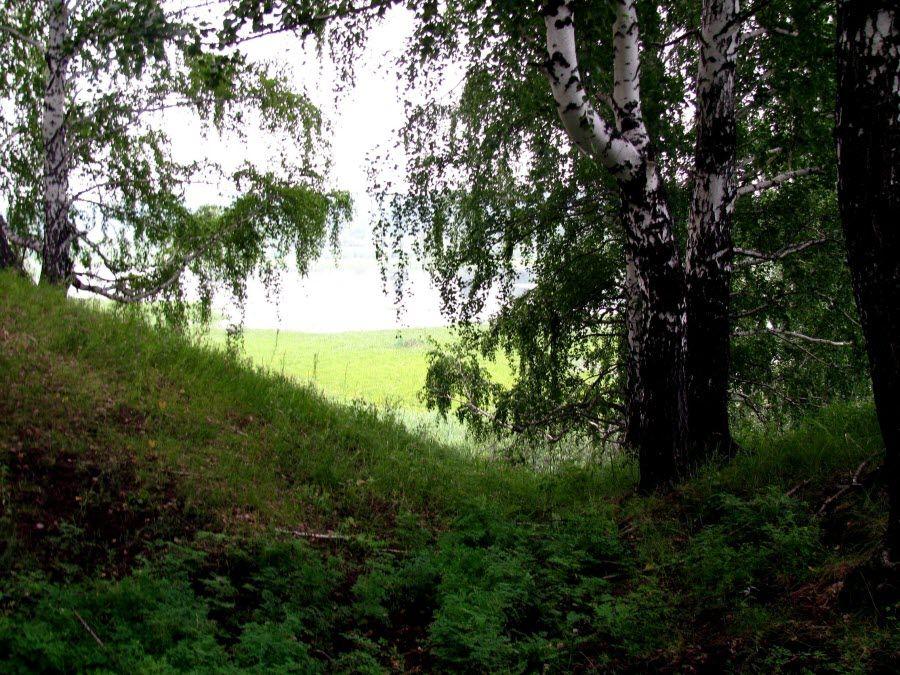 Вид с Чудской горы Омской области фото