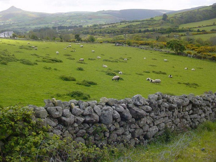 Фото каменных стен в Национальном парке Коннемара в Ирландии