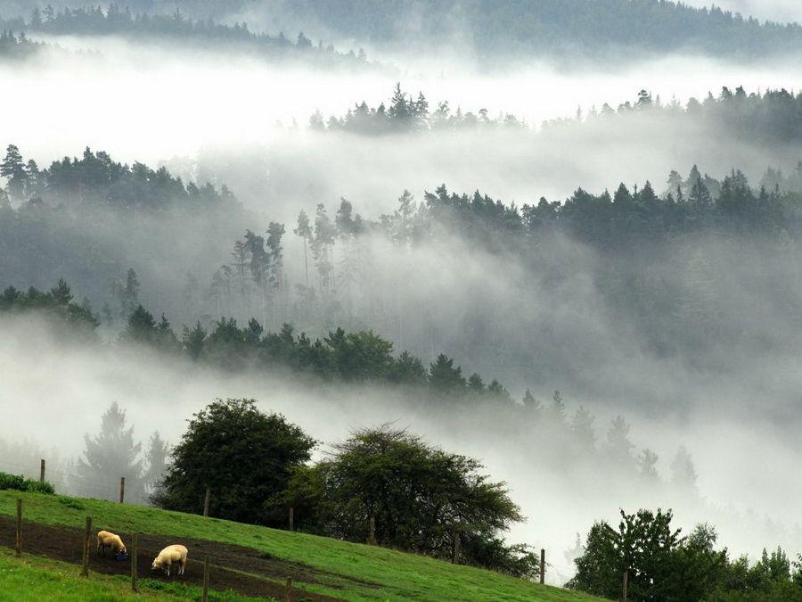 Фотография пейзажа Чешской Швейцарии