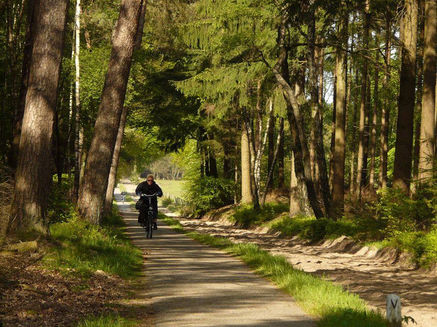 Национальный парк Де-Хоге-Велюве в Нидерландах фото