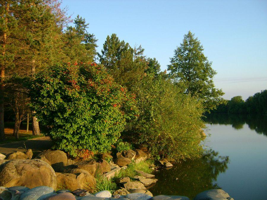 Фото берега пруда в Дендрологическом парке им. Букреева