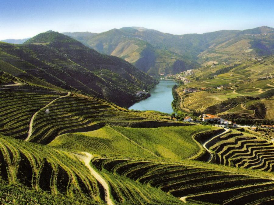 Фотография виноградников в долине Дуэро в Португалии