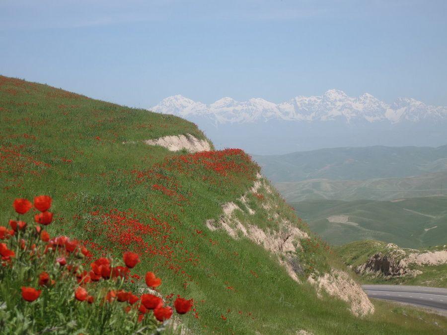 Пейзаж Ферганской долины фото Узбекистана