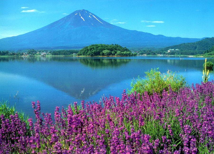 Фото Фудзиямы на фоне цветущего поля и озера