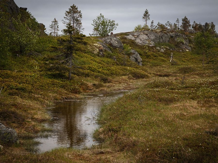 Висячие болота на горе Киваккатунтури фотография