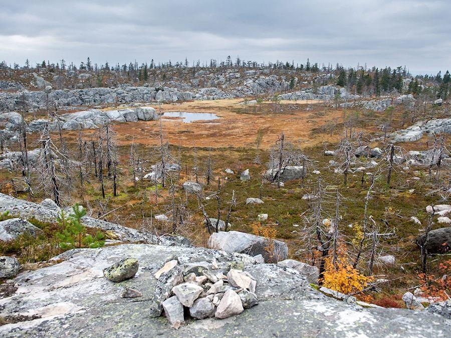 Фото изломанного леса на вершине горы Воттаваары