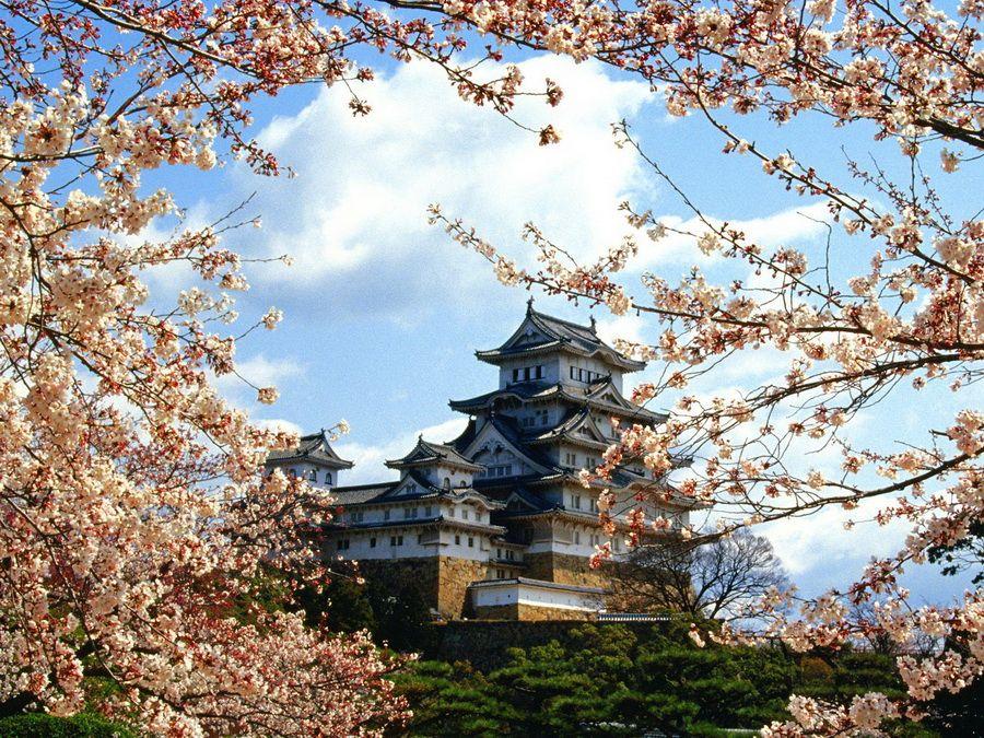 Фото замка Химедзи в обрамлении цветущих ветвей сакуры