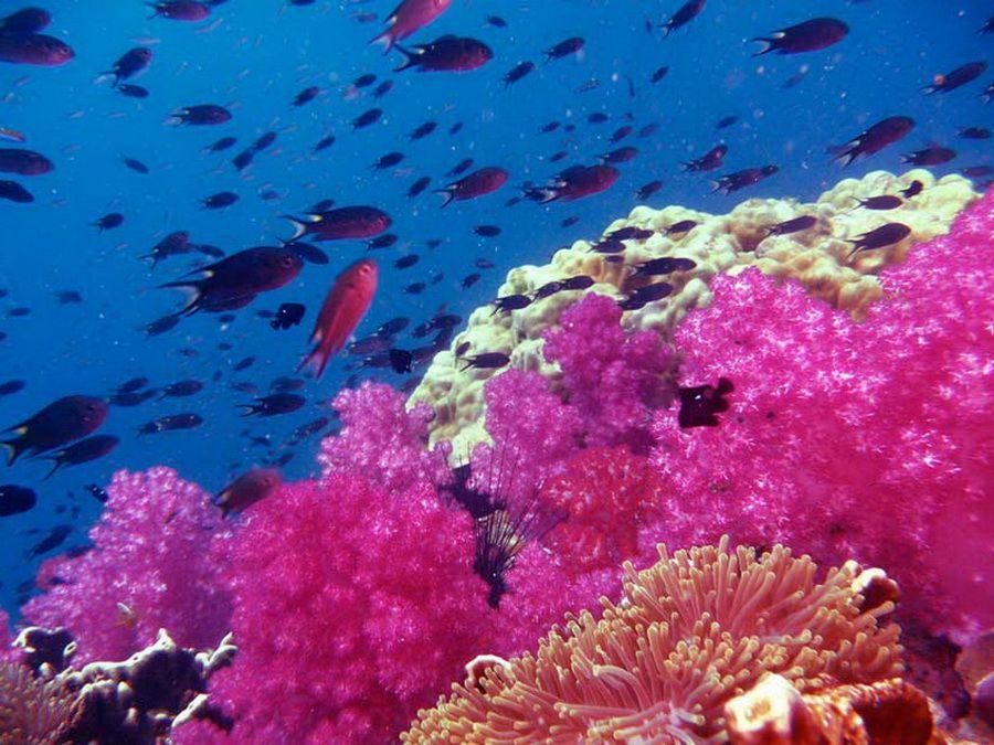 Коралловые рифы возле острова Хин Даенг фотография