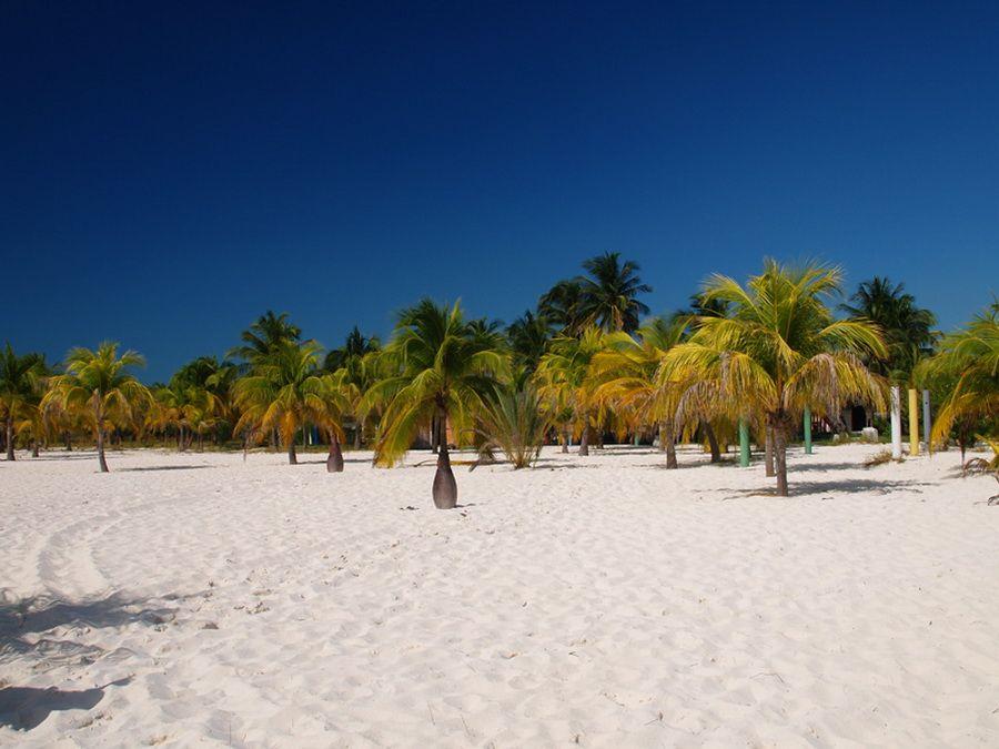 Фото пальмовой рощи на острове Хувентуд, Куба