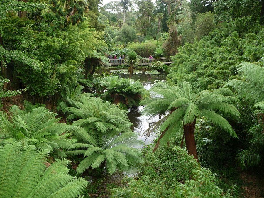 Зона джунглей фотография Заброшенных садов Хелигана в Англии
