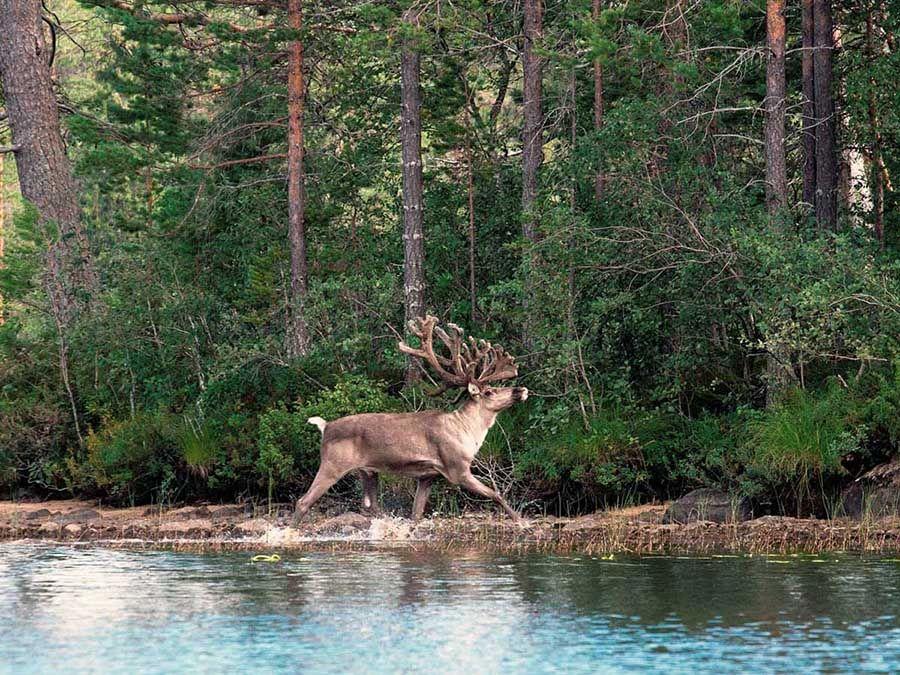 Фото природы в Калевальском национальном парке