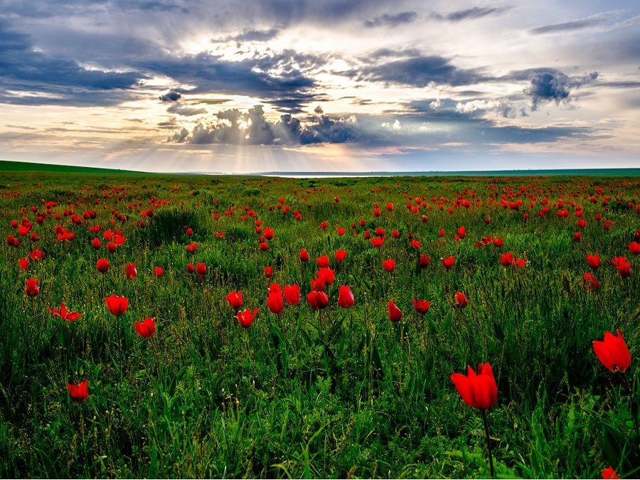 Фотография Калмыцкой степи