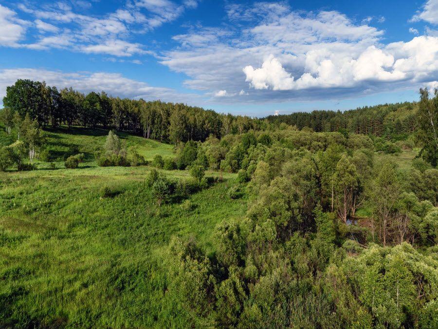 Фото невероятных лесов Калужской области