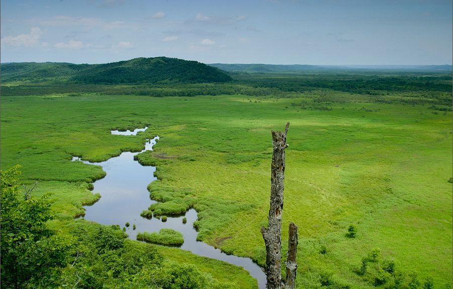 Фото пейзажа болот Кусиро на острове Хоккайдо