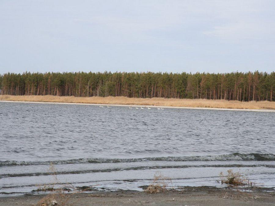 Озеро Горькое осенью фото Курганской области