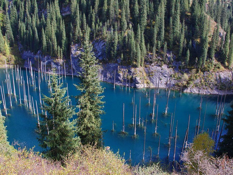 Фото деревьев Стражей на озере Каинды в Казахстане