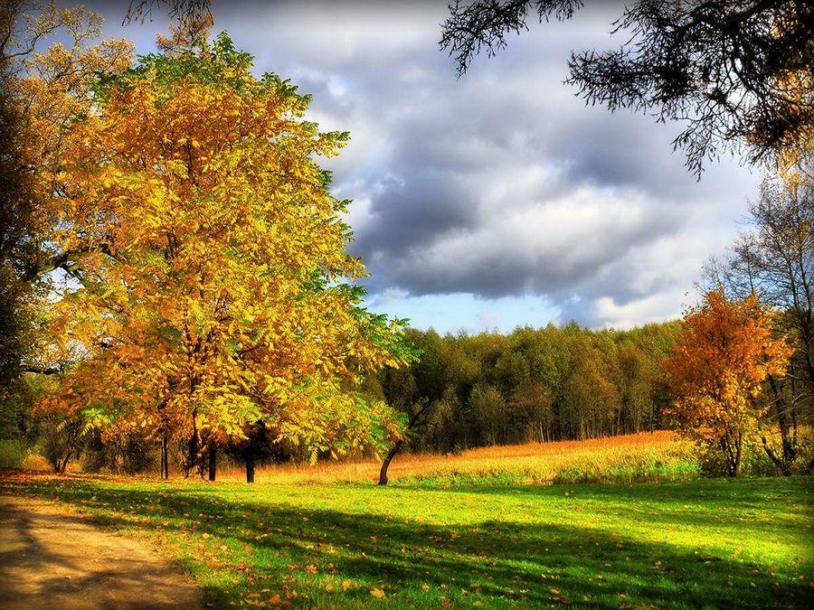 Фото Лошицкого парка в Минске