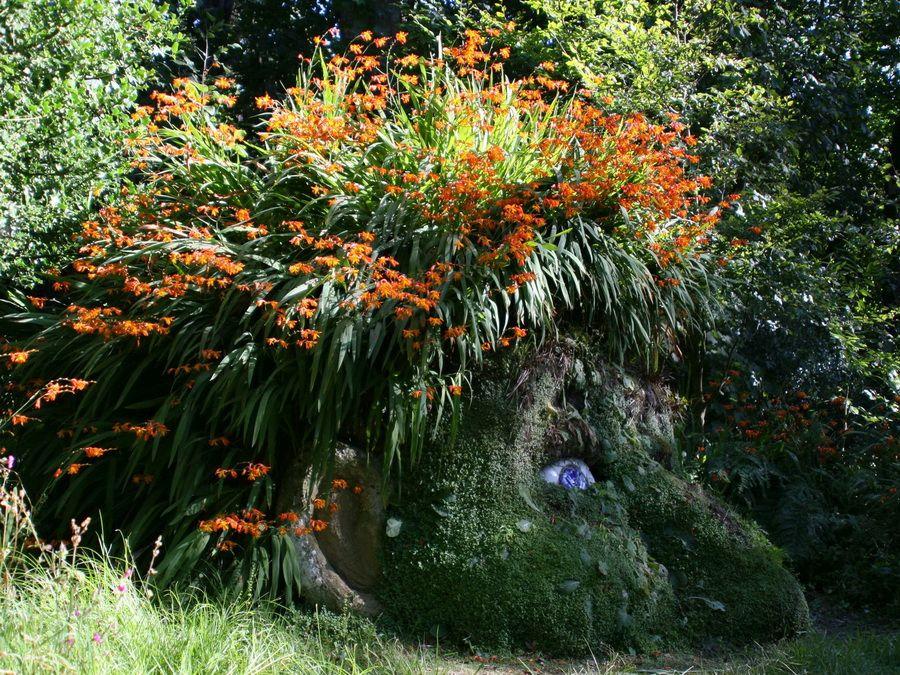 Фото цветущей головы в Затерянных садах Хелигана