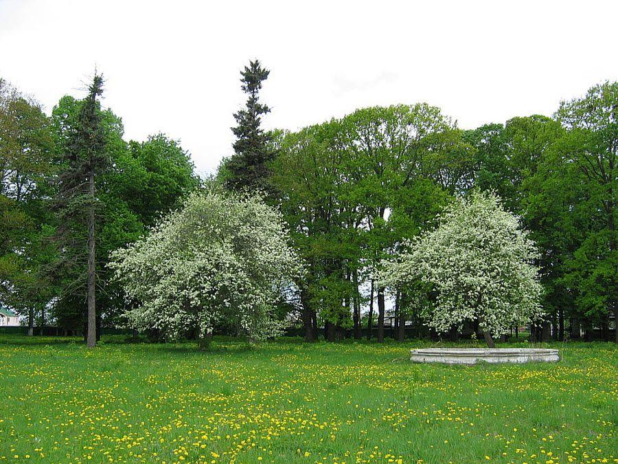 Старинный парк усадьбы В. Г. Асеева фото