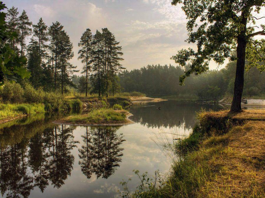 Фото вид на реку Пра в Мещерском парке