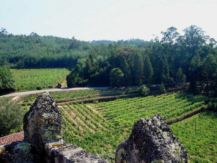 Виноградники Минью в Португалии фото