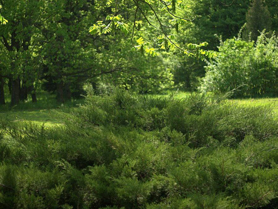 Фото пейзажа в Центральном ботаническом саду Минска