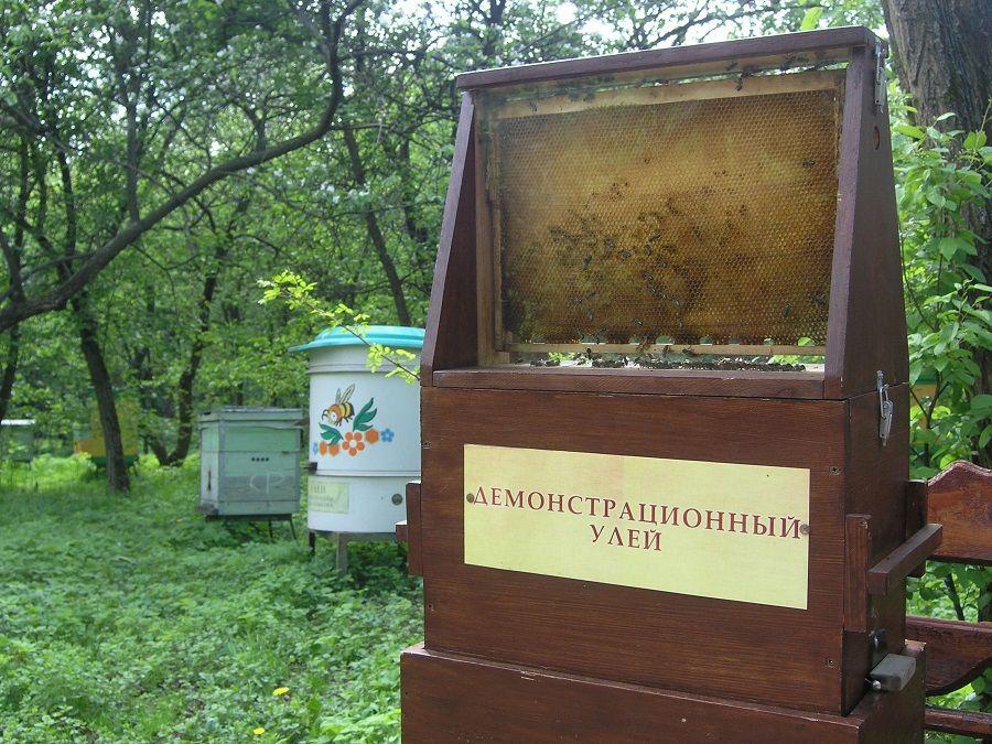 Фотография улья в Музее пчеловодства