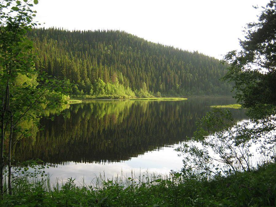 Озеро Паанаярви в Национальном парке Карелии фото