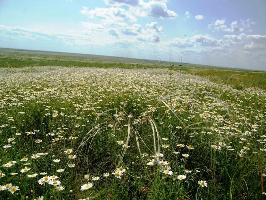Красивые поля природного заповедника Ростовский фото