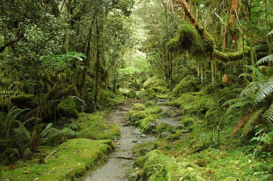 Фото красивого водопада в Новой Зеландии