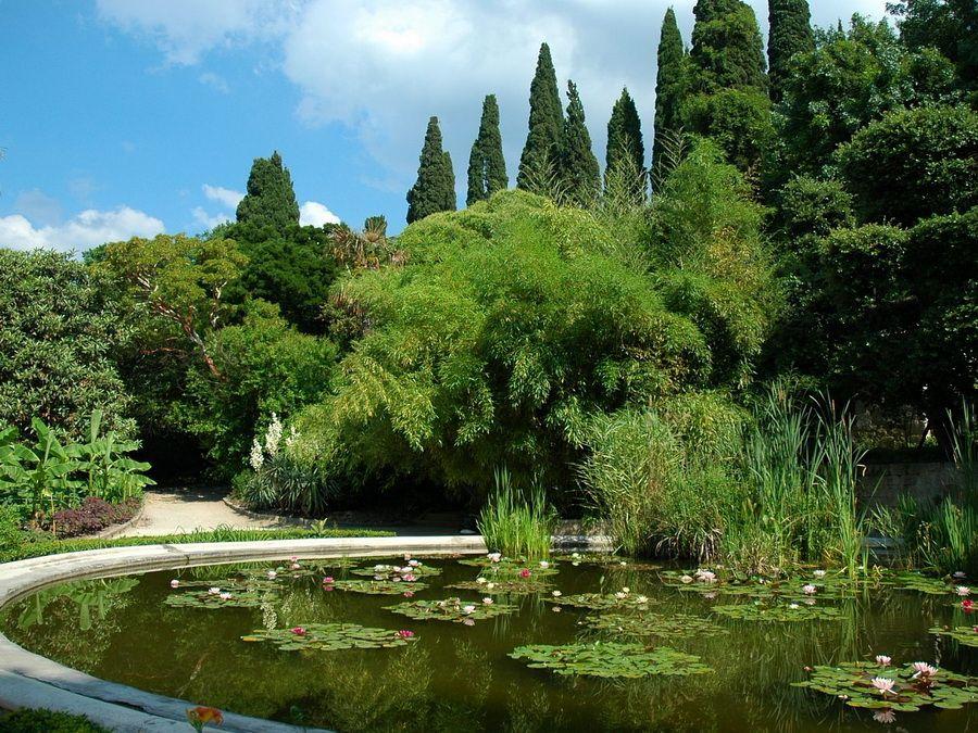 Никитский ботанический сад, фотография пруда