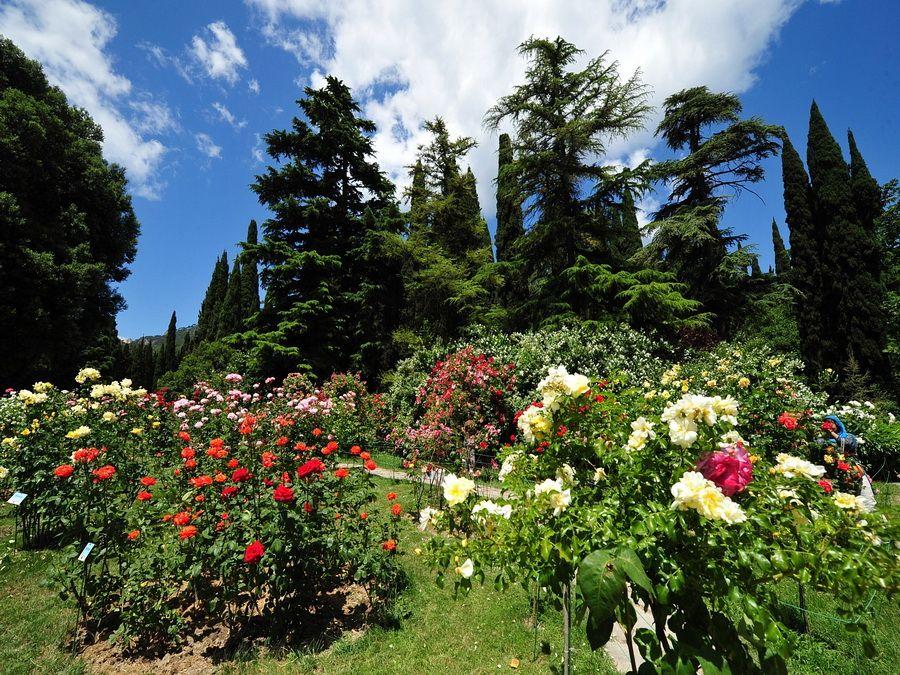 Розарий Никитского ботанического сада фотография