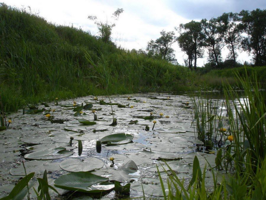 Фото красивой природы питомника в Актарске