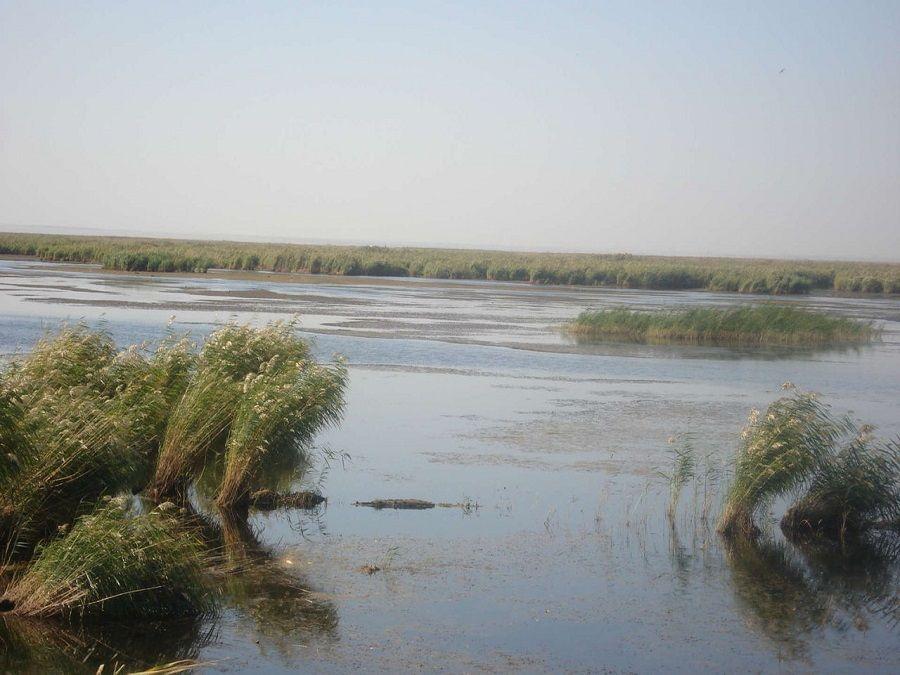 Фотография камышей на озере Деед-Хулсун
