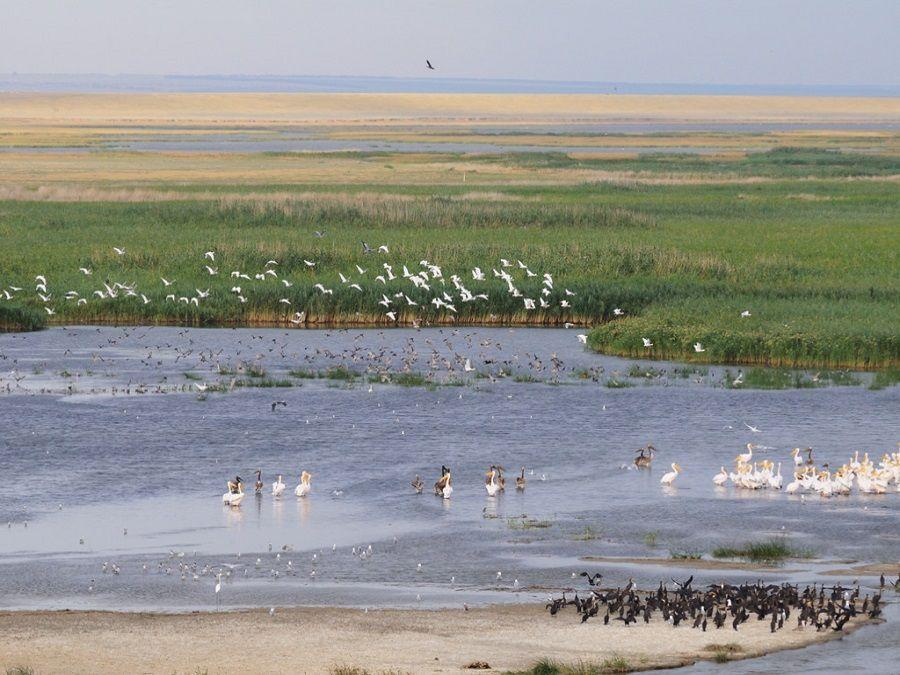 Фотография популяции птиц на озере Деед-Хулсун