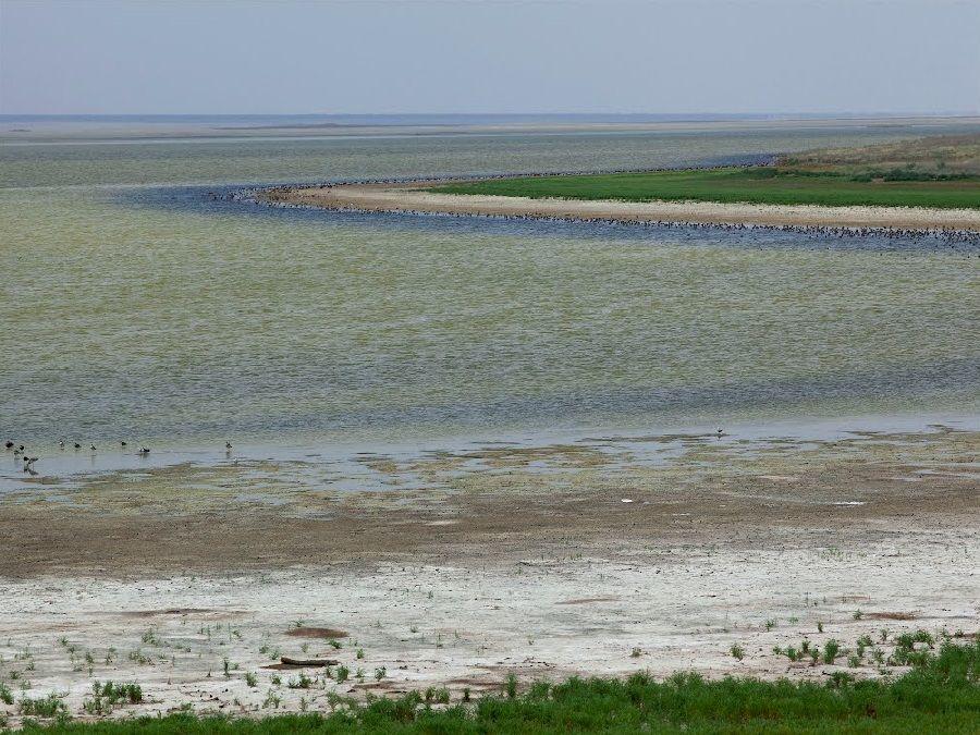 Фотография побережья озера Голый Лиман