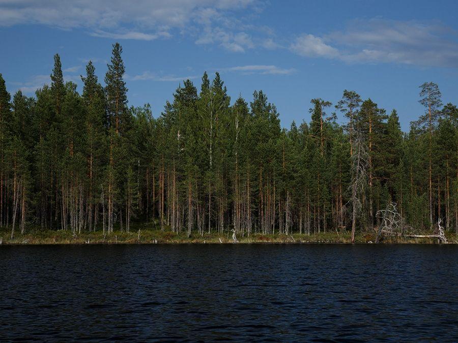 Фотография северного берега озера Пизанец