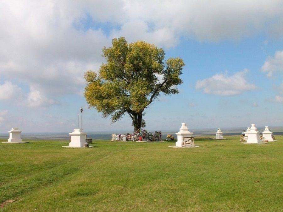 Фотография Одинокого тополя в Хар-Булуке